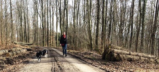 Leinenlos – wie hier Fizz und Skipper mit Inka – durch den Deister dürfen Hunde nur noch im März laufen, denn am 1. April beginnt der Leinenzwang während der Brut- und Setzzeit. (Bild: An-der-Leine.de / Inka Burow)