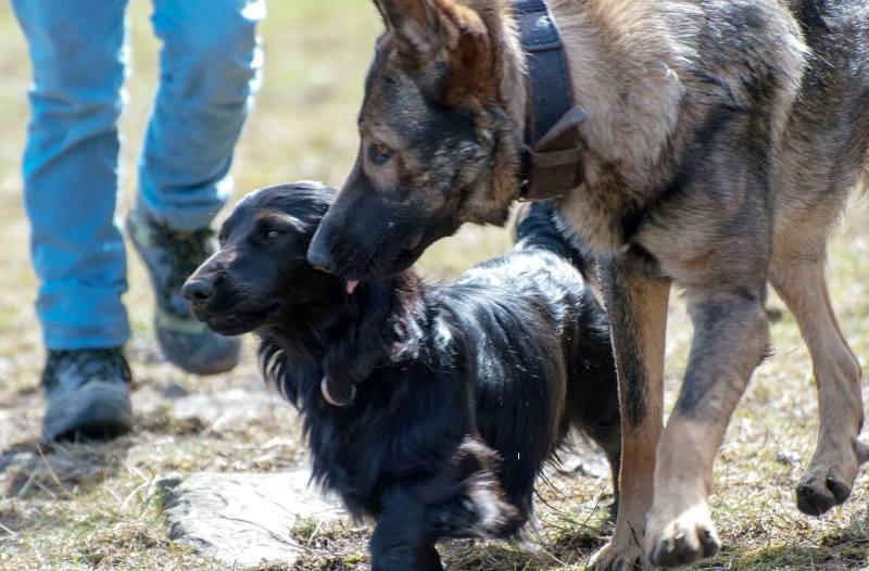 """Das Thema des 2. Fotowettbewerbs der """"Leinenlosen"""" lautet: Hundefreundschaften. (Foto: Karen Körtge, Deisterhunde)"""